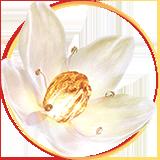 Whitening-lily-mask