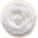 Whitening-rose-mask
